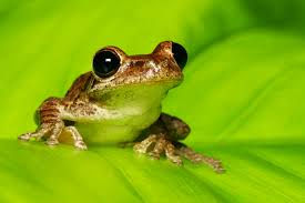 in frogs early activity of gut microbiome shapes later health