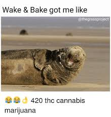 Wake N Bake Meme - wake bake got me like 420 thc cannabis marijuana baked