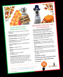 thanksgiving food safety tips for your rescue dogs 101