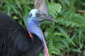 Canopy Birds by Top 10 Amazing Birds Terrific Top 10