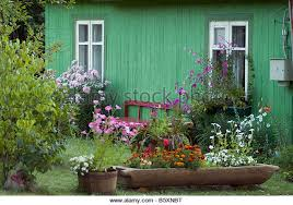 traditional cottage garden flower stock photos u0026 traditional