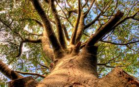 thick skinned tree 1920 x 1200 forest photography miriadna