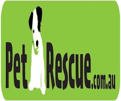 animal charity cards lights decoration