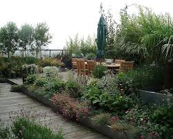 roof garden plants roof garden for plants lovers outdoor ideas pinterest plants