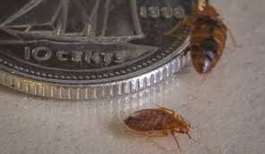 Sleep Number Beds Toronto Bed Bugs And Beyond Toronto Bed Bug Pest