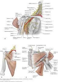 chapter 16 the shoulder dutton u0027s orthopaedic examination