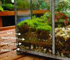 ten plants to grow in closed terrariums u0026 under cloches