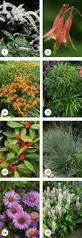 native new england plants 15 great deer resistant native plants audubon connecticut