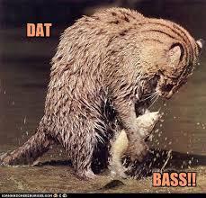 Dat Ass Cat Meme - i can has cheezburger dat ass funny internet cats cat memes