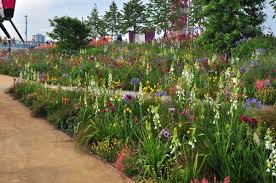 british native plants telling the story of uk naturalistic planting to japan musings