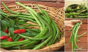 grow snake beans yard long beans for a tasty fried bean dish