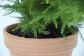 indoor trees that don t need light with these indoor plants that donut need sunlightrhgardenerdycom