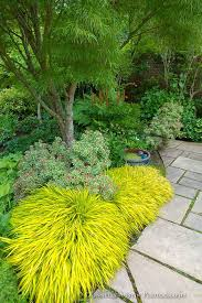 download garden plantings solidaria garden