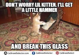 Funny Kitten Meme - kitten memes cat breed selector
