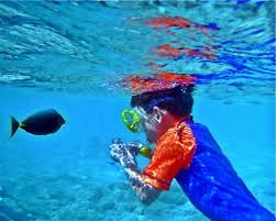 Hawaii snorkeling images Top five snorkeling spots in the islands hawaii magazine facebook jpg