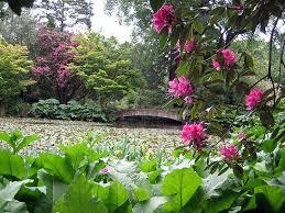 New Zealand Botanical Gardens Traveling Boy Wendy Koro The South Island Of New Zealand