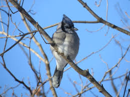 the old and new seasons of our lives northstarnature
