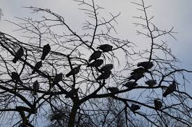 birds sitting on tree free stock photos 15 845 free