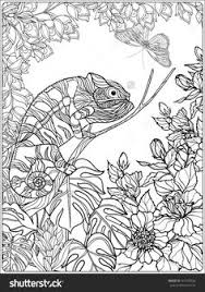 tropical birds and garden coloring page for adults shutterstock
