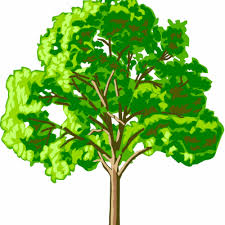 learn trees their scientific names memrise