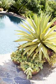 Walled Garden Centurylink by 17 Best Images About Water Wise Gardening On Pinterest Agaves
