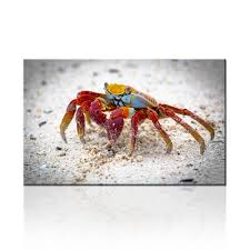 Drop Shipping Home Decor by Popular Crab Wall Decor Buy Cheap Crab Wall Decor Lots From China