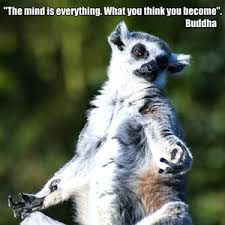 Lemur Meme - lemur is channelling the spirit of buddha by rakac meme center