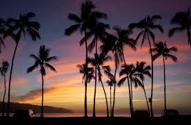 amazing hawaii palm trees hawaiian sunset info home decoractive