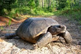 Louisiana wildlife images 12 amazing wildlife species that call louisiana home jpg