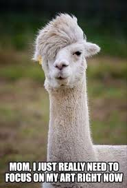 Llama Meme - hipster llama it s not a phase know your meme