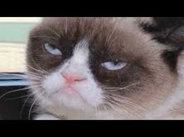 Frown Cat Meme - grumpy cat goes from meme to the big screen youtube