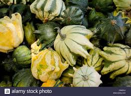 gourd gourds ornamental fruit stock photos gourd gourds
