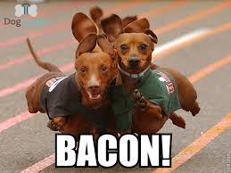 Dog Bacon Meme - wait did you say bacon as told by yours truly