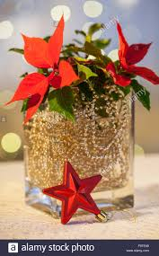 material poinsettia gold chain glass vase water