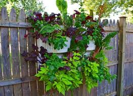 18 best vertical vegetable garden images on pinterest garden dunneiv