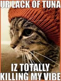Hipster Cat Meme - hipster cat humor pinterest hipster cat dubstep and humor