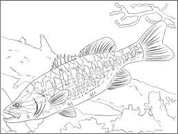 cozy ideas freshwater fish coloring pages freshwater fish coloring