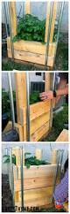 Build Vegetable Garden Fence by Best 25 Vegetable Boxes Ideas On Pinterest Gardening Home