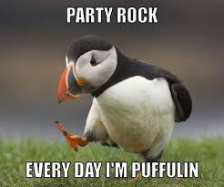 Cute Penguin Meme - fancy cute penguin meme party puffin kayak wallpaper