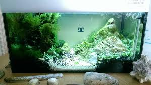 aquarium of the month may warehouse aquatics