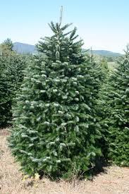 choose and cut christmas tree farm near greensboro north carolina