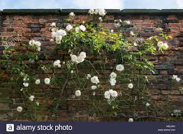trellis garden wall stock photos u0026 trellis garden wall stock
