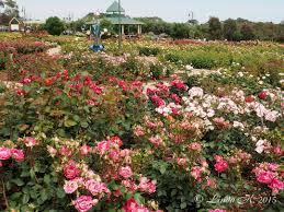 Rose Garden Layout by Mornington Botanical Rose Gardens Inc