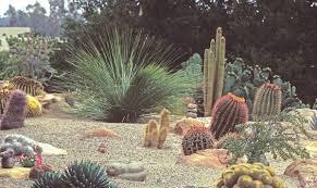 desert garden ideas u2013 cicaki