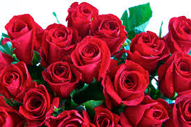 different color roses the meaning 8 different types of popular funeral flowers