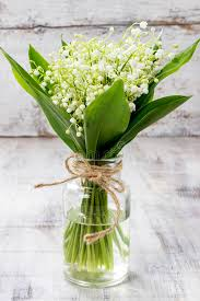 of the valley bouquet bouquet of of the valley flowers stock photo image of