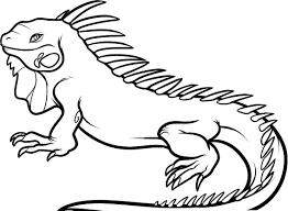 iguana coloring page jacb me