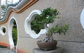 plastic artificial banyan tree bonsai plants with