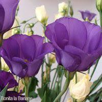 17 best flower talk images on pinterest beautiful flowers blue