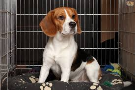 crate training crate training your dog or puppy pets4homes
